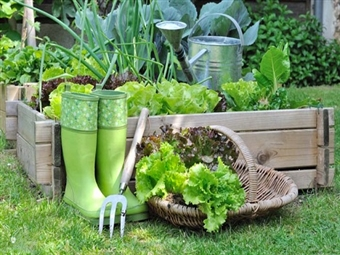 Curso Online Horta Urbana Ecológica por 19€ no iLabora com Certificado. Cultive no Seu Terraço!
