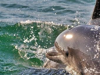 Rota dos Golfinhos no Estuário do Sado desde 15€ de Manhã. Momento único para Toda a Família!