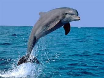 PASSEIO à Tarde para ver GOLFINHOS no Estuário do Sado desde 17.50€. Aproveite para Navegar, Apreciar e Saborear em Família!