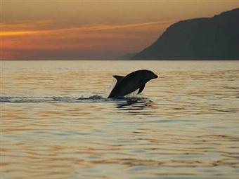 Sunset no Estuário do Sado com Rota dos Golfinhos desde 12.50€ num Cruzeiro Get Zen. Momento Único com um Pôr-do-Sol Fantástico!
