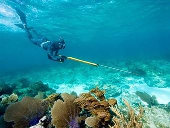 Baptismo CAÇA SUBMARINA em Tróia ou Cabo Espichel para 1 pessoa por 55€. Mergulhe nesta aventura!
