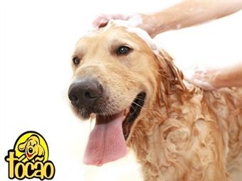 Dar Banho ao seu CÃO é uma dor de cabeça para si? Em Lisboa pode deixá-lo com a Kids Pony Dog e garantimos um amigo cheiroso desde 16.90€.