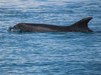 PASSEIO à Tarde para ver GOLFINHOS no Estuário do Sado desde 15€. Aproveite para Navegar, Apreciar e Saborear em Família!