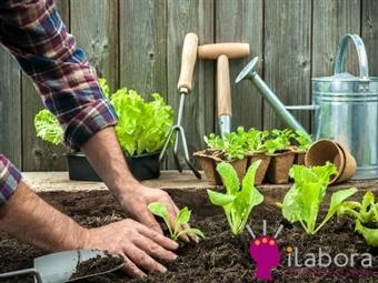 Curso Online HORTA URBANA ECOLÓGICA por 19€ no iLabora com Certificado. Cultive no Seu Terraço e colha alimentos de qualidade!