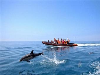 TERCEIRA - AÇORES: Estadia de 2 Noites, Voo de Lisboa, Passeio de Barco para ver Baleias e Golfinhos, Transferes e Seguro desde 242€.