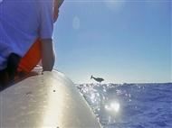 Passeio de Barco em Sesimbra com Observação de Golfinhos para 2 pessoas.