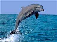 Golfinhos no Estuário do Sado num Cruzeiro Get Zen. Aproveite para Navegar, Apreciar e Saborear!