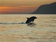Sunset no Estuário do Sado com Rota dos Golfinhos num Cruzeiro Get Zen.