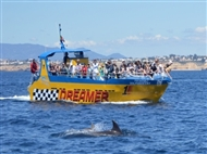 Grutas e Golfinhos em ALBUFEIRA: Passeio Junto ás Lindas Falésias Algarvias.