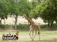 Refúgio das Origens - ALENTEJO:1 ou 2 noites com visita ao Badoca Safari Park.