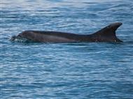 PASSEIO à Tarde para ver GOLFINHOS no Estuário do Sado. Aproveite para Navegar, Apreciar e Saborear!
