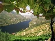 CRUZEIRO no DOURO entre o Porto e a Régua com Almoço, Prova de Vinhos e muito mais.