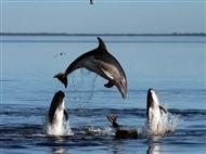 Passeio de Barco em Sesimbra com Observação de Golfinhos para 2 pessoas. Embarque nesta Aventura!