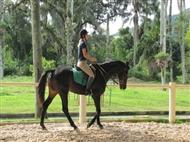 Aula de Equitação, Passeio a Cavalo e Almoço em Sintra. Desfrute deste momento.